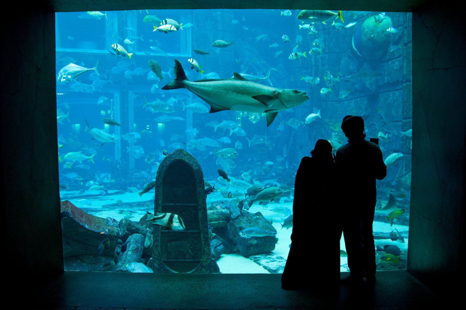 Viewing_main_tank_at_Lost_Chambers_Aquarium